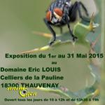 Exposition de photographies et peintures animalières à Thauvenay (18), du vendredi 1 er au dimanche 31 mai 2015