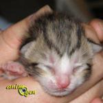 Croissance et sevrage des chatons en images