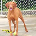 Education et comportement : la récupération d'un chien dans une pension après un long séjour