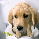 Santé : la diarrhée chez le chien (causes, prévention, solutions)