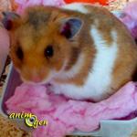 Comment organiser les vacances de son hamster ?