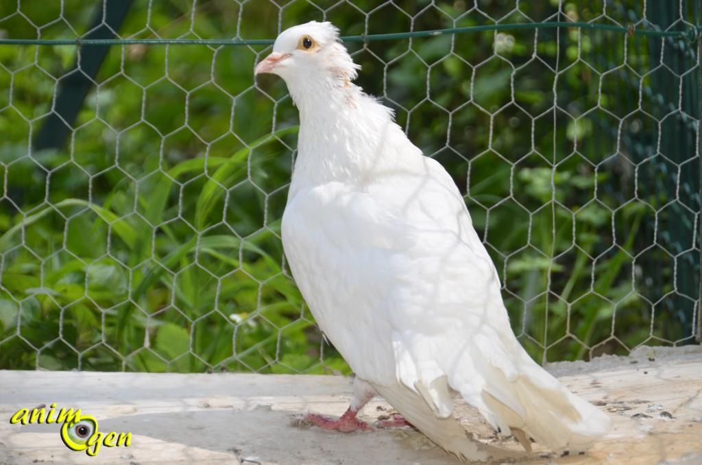 Adaptez son environnement au handicap de votre oiseau