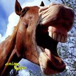 La science révèle ce que nos chevaux hennissent