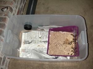 Education : comment apprendre à un furet à utiliser un bac à litière ?