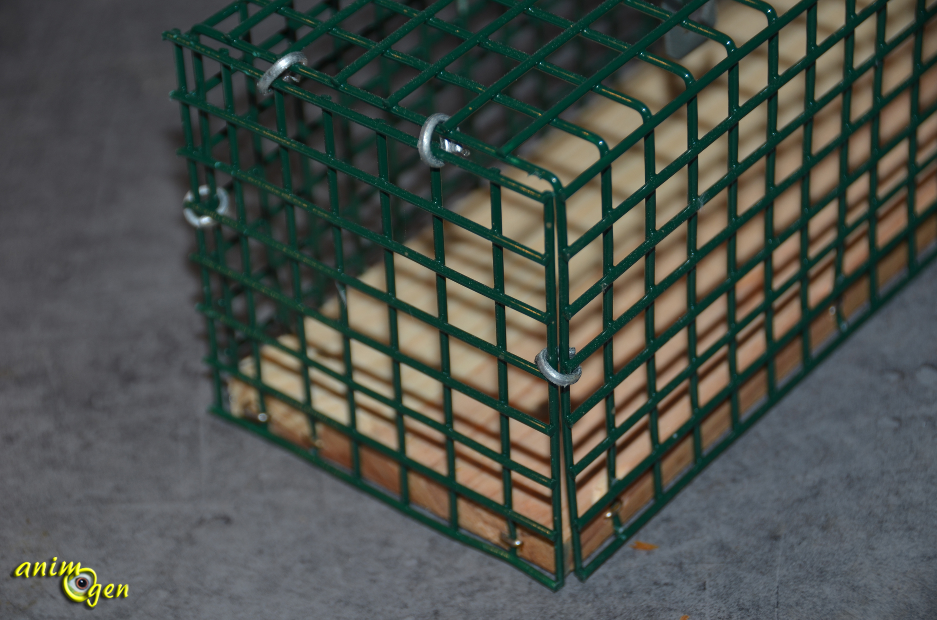 Tuer des rats free boutique rats with tuer des rats - Comment attraper un rat ...