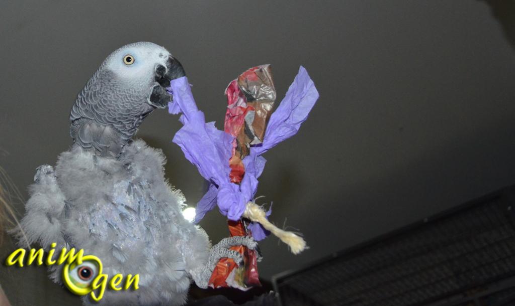 Les jouets à privilégier pour les perroquets sujets au picage