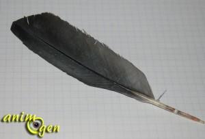 Le picage chez le perroquet : origines et solutions