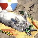 Santé : les dangers de la chaleur pour les lapins (symptômes, traitement et prévention)