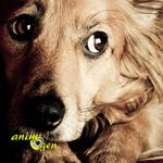 Le stress chez le chien : réagir rapidement pour éviter le pire