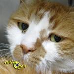 Santé : les signes de vieillesse notables chez les chats