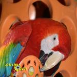 Jouet de foraging pour perroquets : Boomer, de Karlie (test, avis, prix)