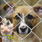 Quelle attitude un maître doit-il avoir lors de l'adoption d'un chien ayant subi des sévices ?