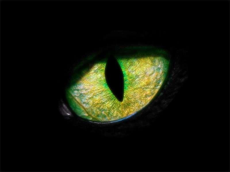 Comportement : votre chat complote-t-il pour vous tuer ?