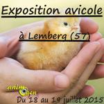 Exposition avicole de jeunes sujets à Lemberg (57), du samedi 18 au dimanche 19 juillet 2015