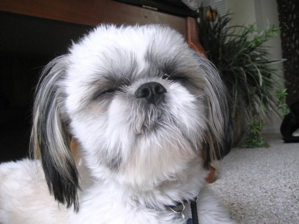 Santé : la cécité chez le chien, symptômes et adaptations nécessaires