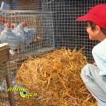 Exposition vente d'animaux de compagnie à Armentieux (32), le dimanche 07 juillet 2015