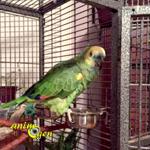 Les phobies de nos perroquets : l'hyper-attachement à la cage (causes et symptômes)