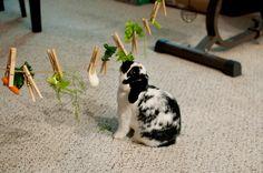 5 idées d'activités pour faire jouer nos lapins