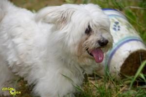 Education canine : comment prévenir les comportements indésirables ?