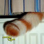 Quel est le rôle de la queue chez les chats ?