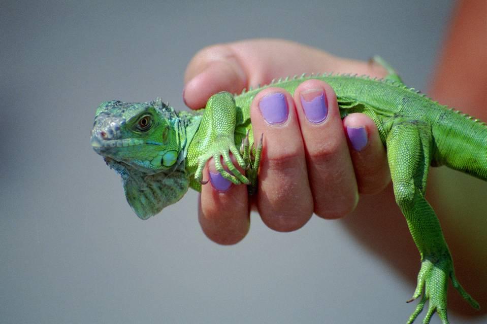 Santé : la salmonellose chez les reptiles et amphibiens (risques, conséquences, prévention)