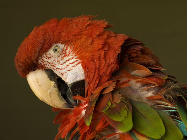 Santé : les oiseaux détiennent-ils le secret de la longévité ?