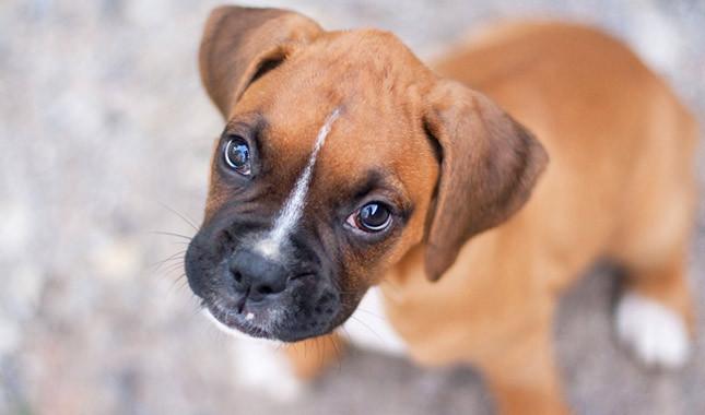 Comment connaître l'âge de nos chiens en années humaines ?