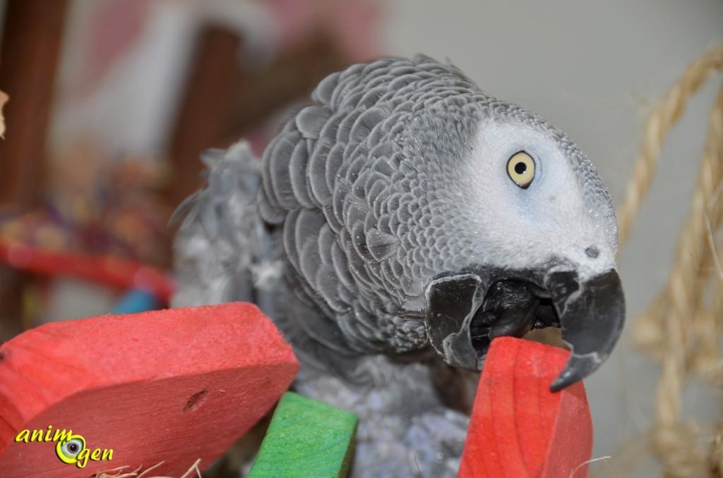 Jouet pour perroquet : fabriquez un oiseau de paradis (tutoriel, test, avis, prix)