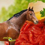 Animaux de compagnie et viande, quelle différence faisons-nous à l'heure du repas ?
