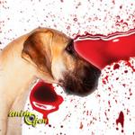 Santé : le saignement de nez chez le chien (causes, symptômes, traitement)