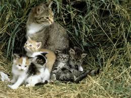 Education adopter un chaton souffrant d un manque de for Adaptation chat nouvelle maison
