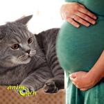 Les astuces pour préparer votre chat à l'arrivée d'un bébé