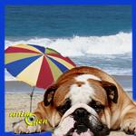 Comportement : comment amorcer le retour de vacances en douceur avec votre chien ?