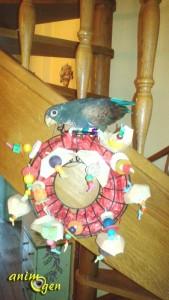 Habiller une couronne-mangeoire pour égayer l'automne de nos perroquets