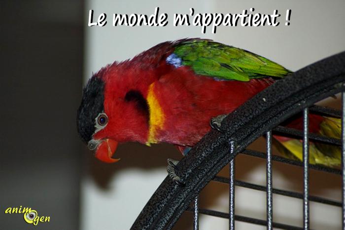 Les phobies de nos perroquets : l'hyper-attachement à la cage (solutions)