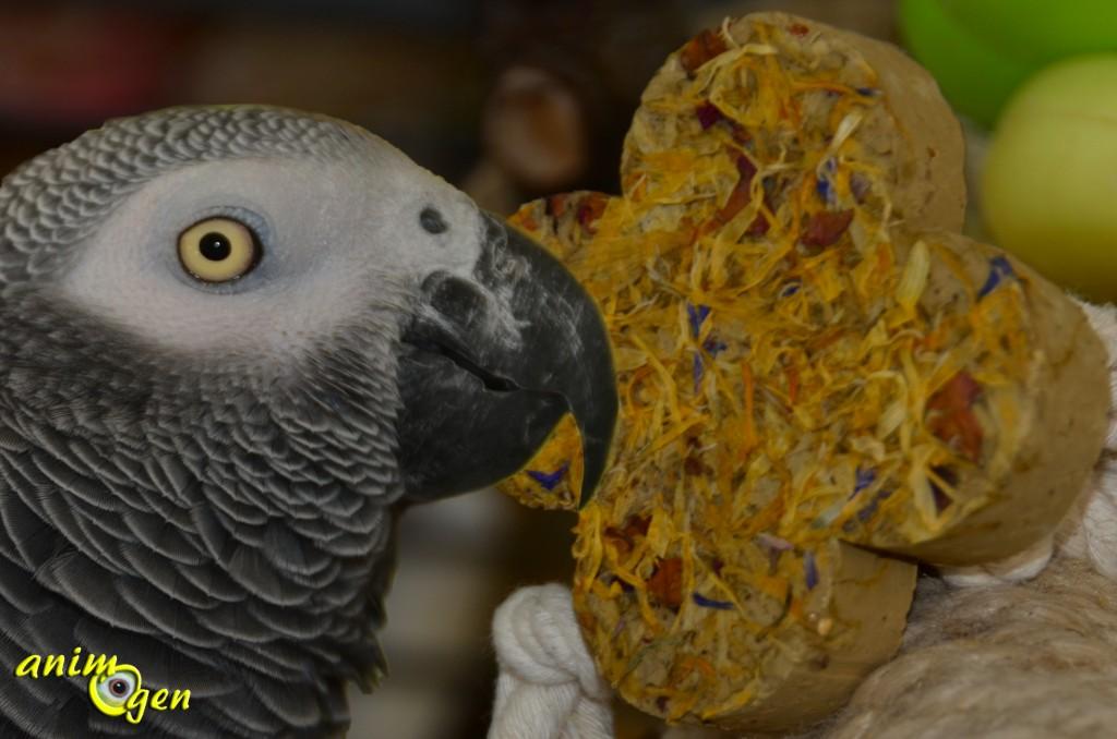 Bloc minéral aux fleurs pour perroquets de Quiko (test, avis, prix)