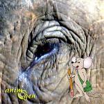 La souris et l'éléphant, un tandem de choc