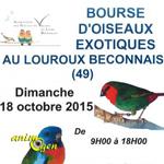 Bourse d'oiseaux exotiques au Louroux Beconnais (49), le dimanche 18 octobre 2015