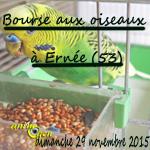 Bourse aux oiseaux à Ernée (53), le dimanche 29 novembre 2015