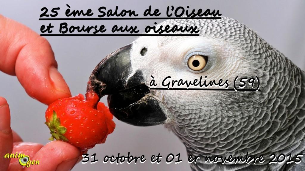 25 ème Salon de l'Oiseau et Bourse aux oiseaux à Gravelines (59), du samedi 31 octobre au dimanche 01 er novembre 2015