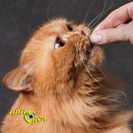 Quelle quantité de nourriture faut-il donner à nos chats ?