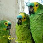 Comportement de couple : les signes de rapprochement chez les Amazones