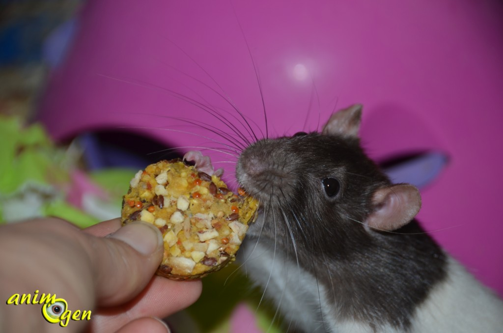 Cookies aux fruits pour rongeurs et lapins, JR Farm (test, avis, prix)