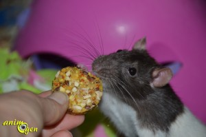 friandise-cookie-JR-Farmalimentation-céréale-fruit-sec-complément-rat-gerbille-rongeur-lapin-test-avis-prix-nac-animal-animaux-compagnie-animogen-6