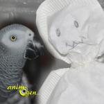 Fabriquez un jouet fantôme pour vos perroquets (tutoriel, test, avis,prix)
