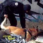 Rôle et utilité des chiens au sein du RAID