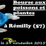 Bourse aux poissons et oiseaux exotiques à Rémilly (57), le dimanche 29 novembre 2015