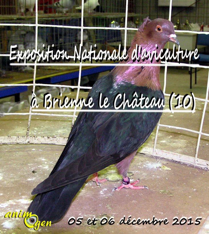 Exposition Nationale d'aviculture à Brienne le Château (10), du samedi 05 au dimanche 06 décembre 2015