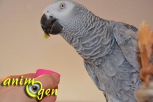 Alimentation : le kiwano, un fruit surprenant pour nos perroquets