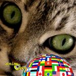 Comportement : les chats sont-ils polyglottes ?